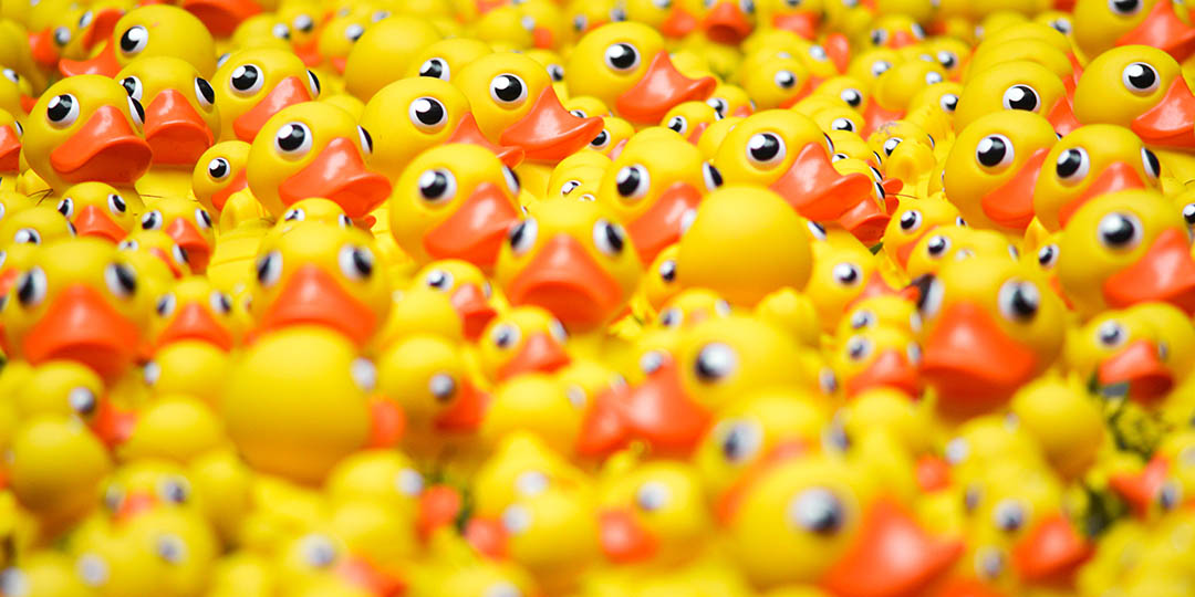 Crowd of yellow rubber duckies